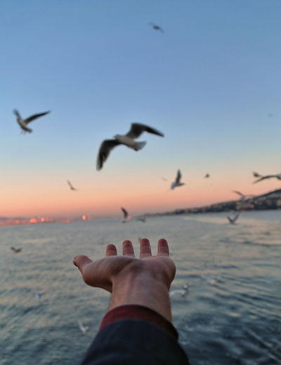 Human Hand Bird Spread Wings Water Flying Vulture Sea Bird Of Prey Sunset Seagull