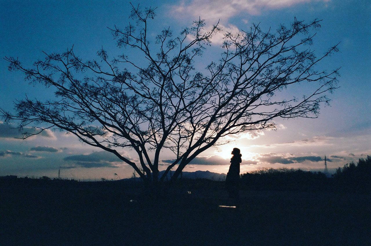 Silhouette Woman Looking At Bare Tree During Sunset
