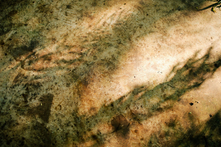 Shade of fern on concrete floor. Pattern Backgrounds Textured  Solid Abstract Close-up Shade Fern Concrete Floor Light