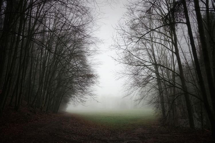 Nebel auf den