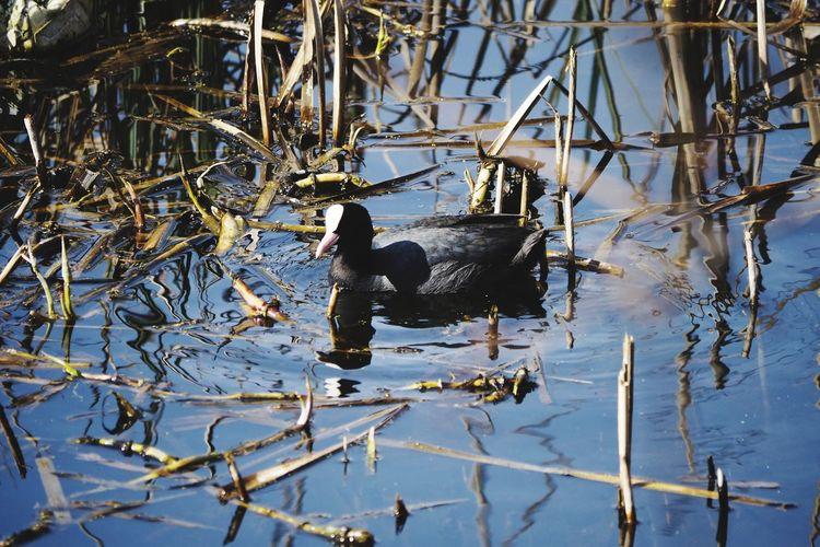 Water Bird Water Bird