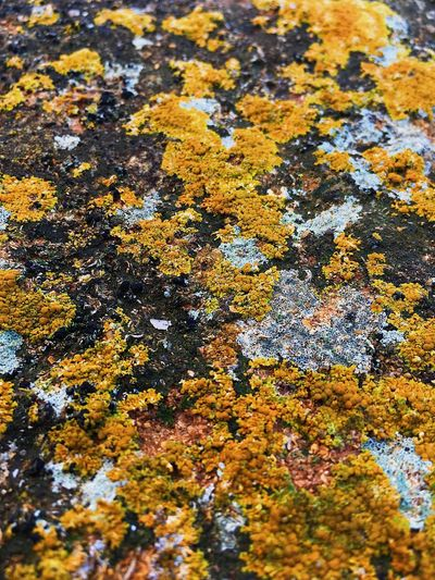 EyeEmNewHere EyeEm Nature Lover EyeEmBestPics EyeEm Best Shots Full Frame Backgrounds No People High Angle View Day Nature Lichen Beauty In Nature Water Moss Yellow Natural Pattern Rock - Object Outdoors Growth Change Land Rock Pattern