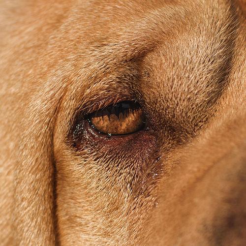 Golden Hair Sharpei Blond Brown Close-up Dog Eyes No People Pets The Week On EyeEm