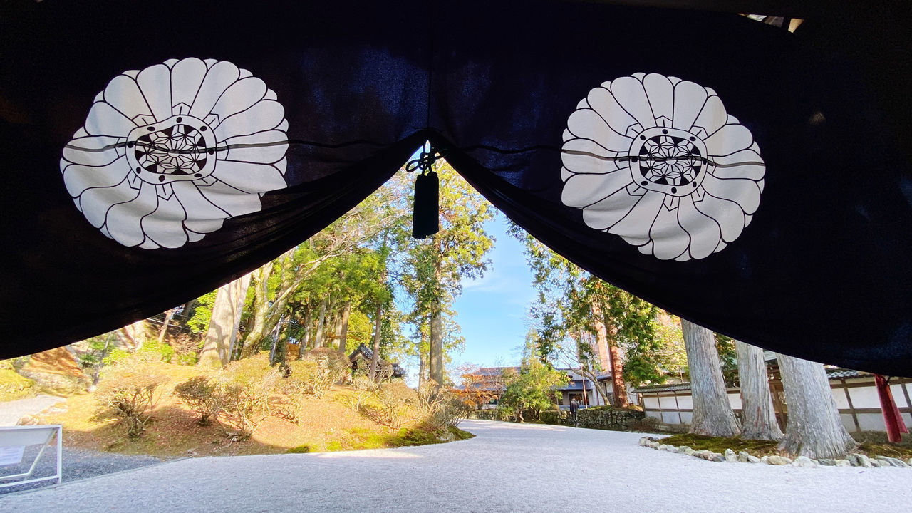 LOW ANGLE VIEW OF LANTERN HANGING BY ROAD AMIDST TREES