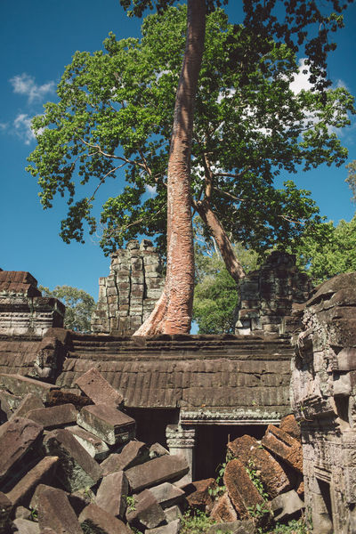 Siem Reap Cambodia Angkor Tree History Plant Architecture The Past Built Structure Ancient Nature Sky Belief Travel Destinations Place Of Worship Tourism Travel Old Ruin Religion No People Old Day Ancient Civilization Outdoors Archaeology Ruined