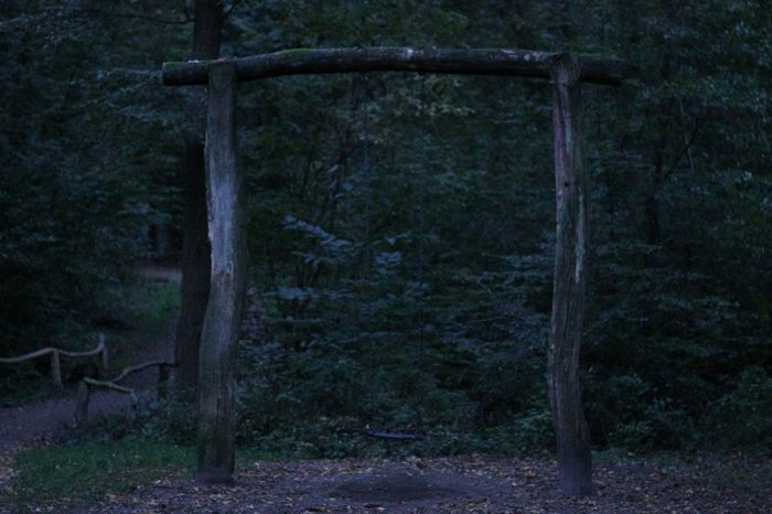 Lonely Swing Intheforest