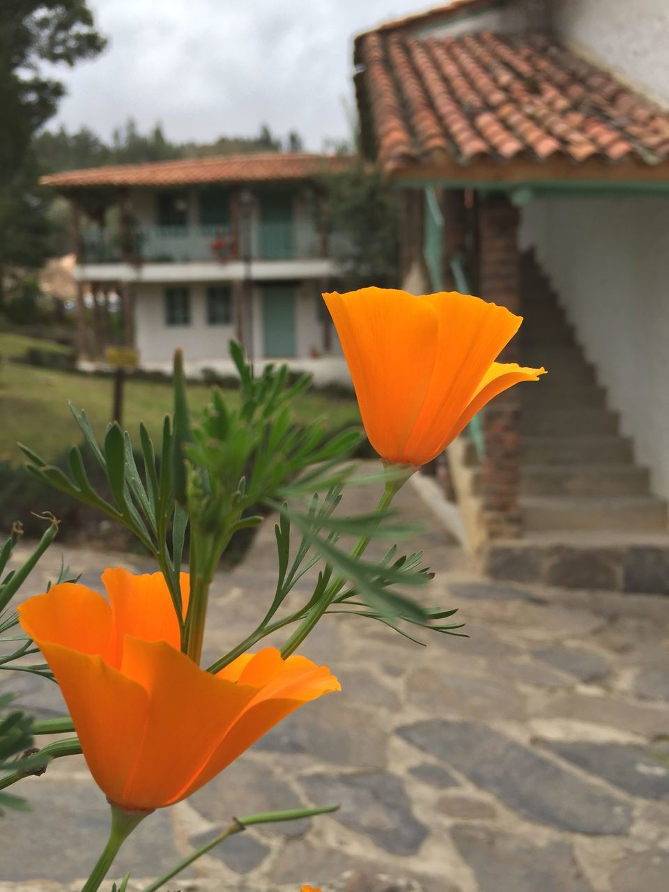 flower, petal, orange color, beauty in nature, freshness, blooming, nature, flower head, outdoors, fragility, growth, plant, focus on foreground, day, no people, yellow, close-up, building exterior, architecture, sky