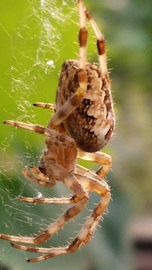Spider Animal Wildlife & Nature Outdoors Wildlife NiceShot