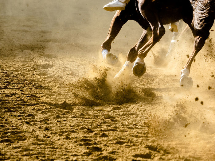 Low Section Of Horse Running On Sand