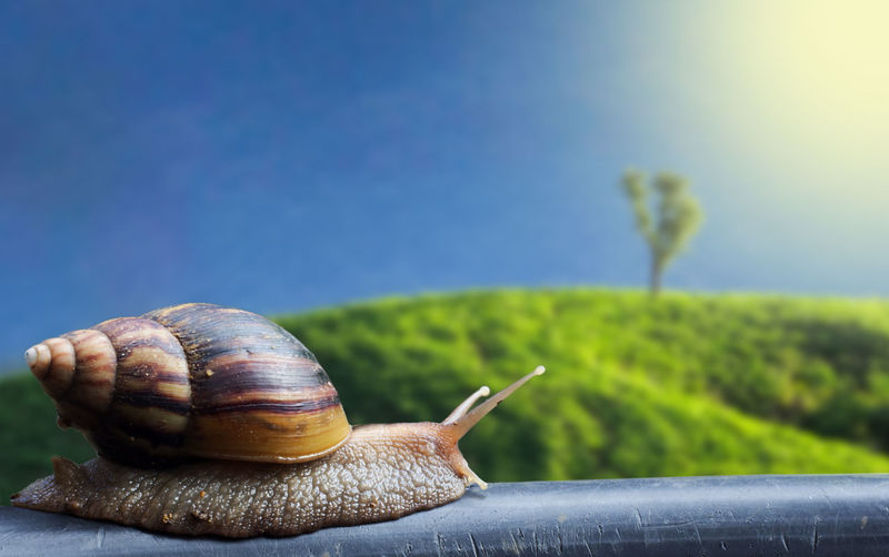 Close-up of snail on railing