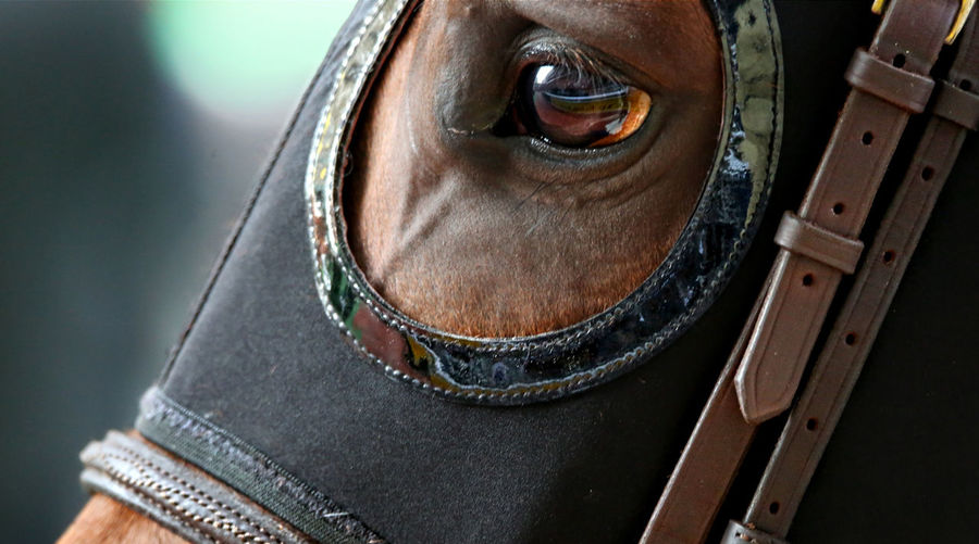 Cropped image of horse wearing mask