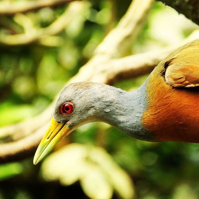 Bird Nature Eye Jaimeduque Colombia P7taylor Epicearthco