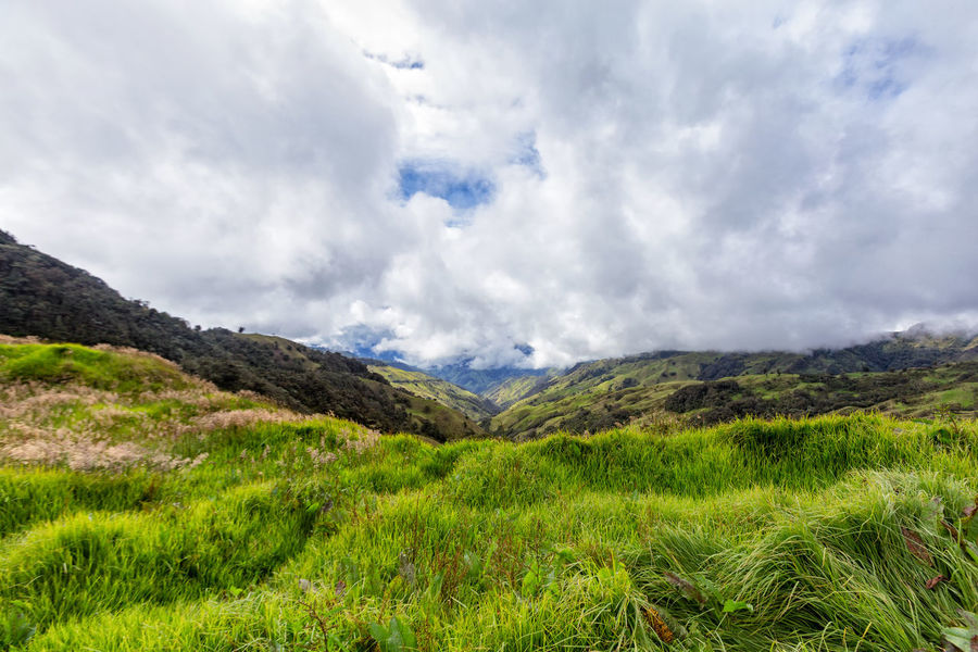 Grassland and clouds in the mountains outside of Salento, Colombia. Cloud Colombia Farm Hiking Palm Pasture Quindío Rural Tree Trip Andean Cauca Colombian  Countryside Forest Hike Jeep Landscape Mountain Outdoors Quindío Salento Tolima Trek Wax