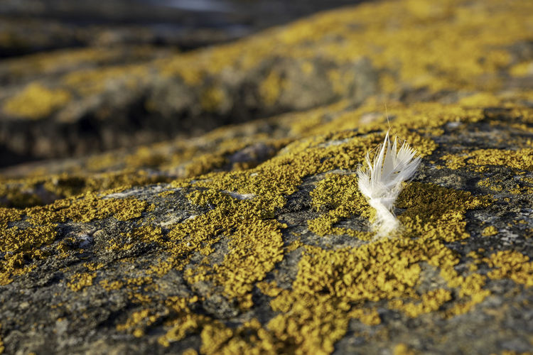 lichen and