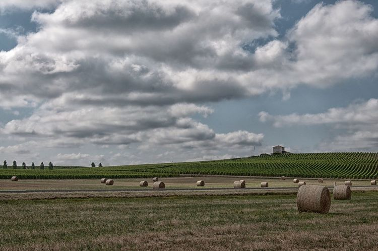 Beauty In Nature Scenics Outdoors Nature Grass Tranquility Hay Bale Day No People Landscape Hay Sky Rural Scene Cloud - Sky Agriculture Field Bale  Vineyard D90 Sky And Clouds Landscape_Collection Landscape #Nature #photography Sauternes France 🇫🇷 Scène Tranquille Bale