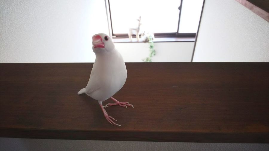 Bird perching on a table