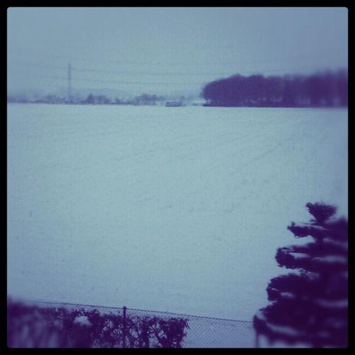 Snowy Hoisten. :-)