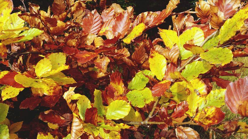 Autumn leafes Oberstaufen Oberallgäu Bavaria Colors Of Autumn