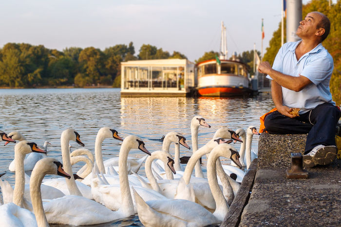 Feeding Swans 43 Golden Moments Afterwork Alster Binnenalster City City Life Day End Of The Day Enjoy Your Life Feeding Swans Feeding The Birds Feierabend Golden Hour Hamburg Happy People Lakeshore Lakeside Leisure Activity Man Feeding Swans Nature Relaxing Moments Swan Swans Tranquil Scene Water