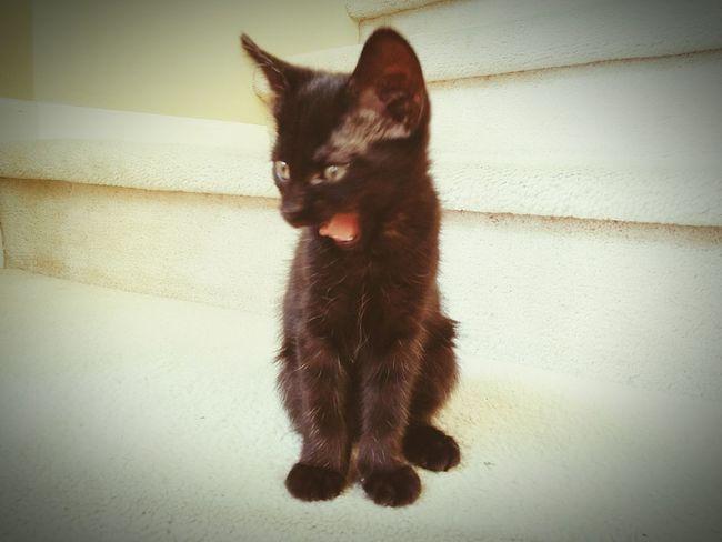 Yawn! Yawn Yawning Yawning Cat Kitty Kitten Cat Cute Stairs