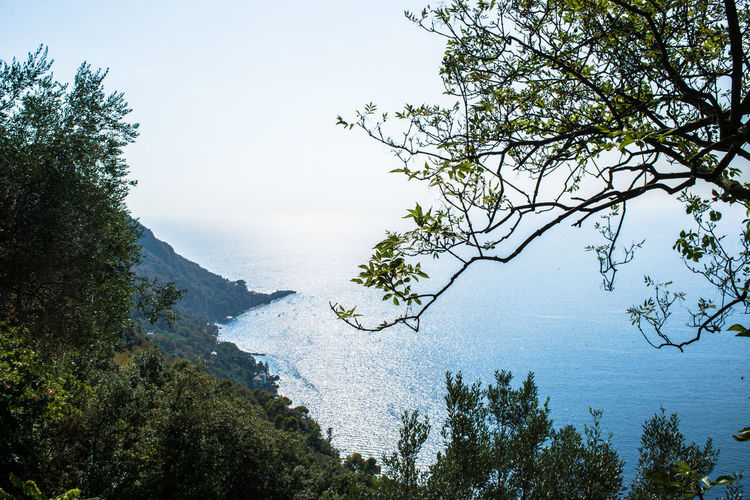 San Rocco Beauty In Nature Branch Cape  Clear Sky Day Foreground Forest Growth Mountain Nature No People Outdoors Punta Chiappa Scenery Scenics Sea Sky Tranquil Scene Tranquility Tree Water