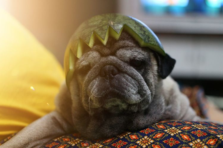 Pets Dog Portrait Lying Down Sleeping Puppy Close-up