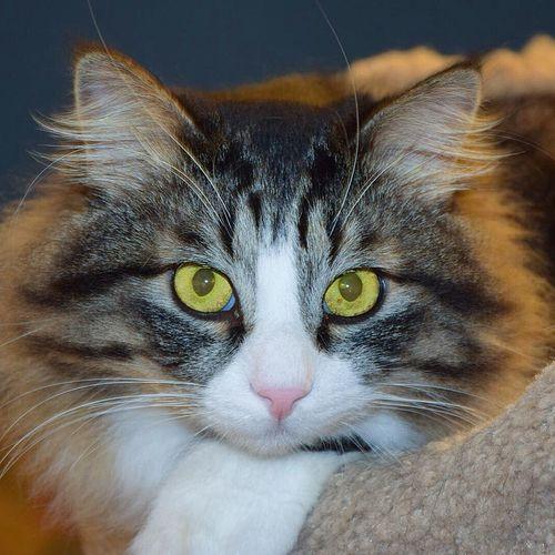 Tosha Cute Pets My Cat Catportrait Cat Cats Cat♡ Pets Pet кот котэ