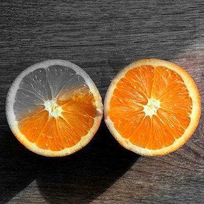 PHOTOGRAPHI Orange