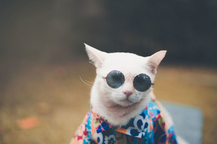 Portrait of Hipster White Cat wearing sunglasses and shirt,animal fashion concept. Portraits Cat Close-up Domestic Domestic Animals Domestic Cat Fasion Feline Focus On Foreground Mammal One Animal Pet Pets Portrait Sunglasses Vertebrate Vintage Whisker EyeEmNewHere
