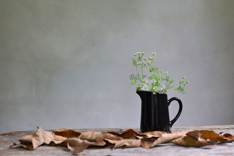 Plants In Pitcher With Leaves On Table Against Wall