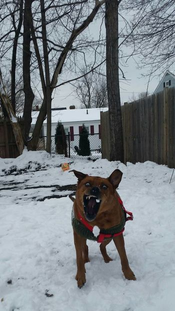 Pierre Savage Snowballs Focused ❤ Good Catch  Good Boy Nature Outdoors Domestic Animals Winter Snow Animal Themes One Animal Cold Temperature Dog Mammal Pets Tree No People Bare Tree Day Pet Clothing