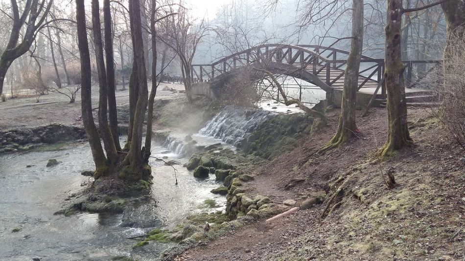 foggy bridge Tree Day Water No People Outdoors Nature Sky Beauty In Nature