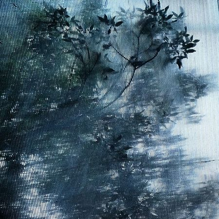 عکاسی رنگی زیبا هنر Photography نقاشی الوان نقطه آبستره Fineart Abstract Dot انتزاعی مفهومی ماکرو Macro Tree Leaf Nature Green درخت برگ