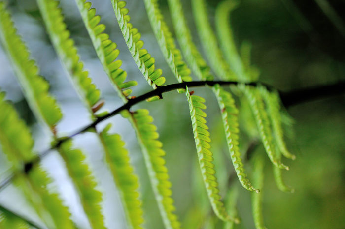 Flora in the ferns, growing dense. Green Growth Natural Natural Beauty Nature Beauty In Nature Close-up Day Expand Ferns Green Color Growth Leaf Nature No People Outdoors Plant Plant Kingdom