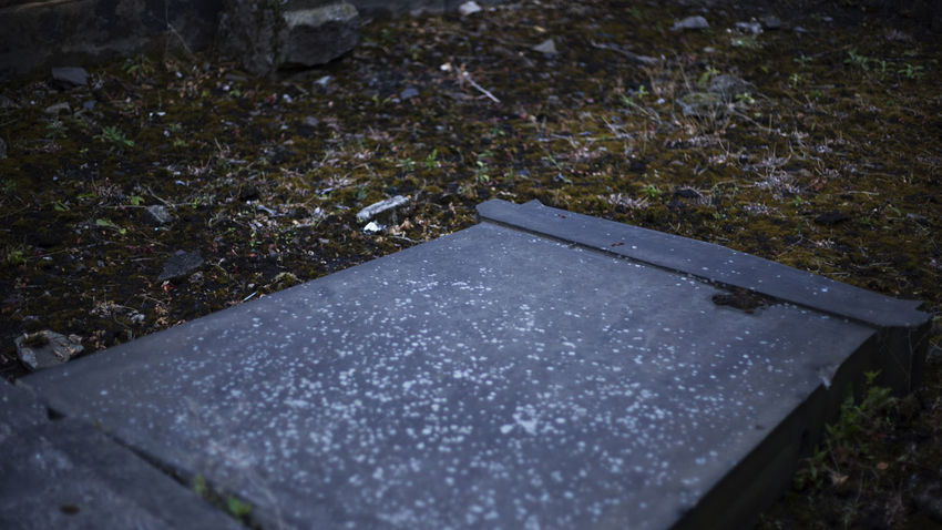 Moss Scotland Cemetery Graveyard Nature No People Water Day Wet High Angle View Selective Focus Plant Footpath Close-up Outdoors Cold Temperature Rain Beauty In Nature Tranquility