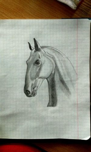 Время рисунков 😄✏😺💎🌠 Рисовашки лошади Мое творчество