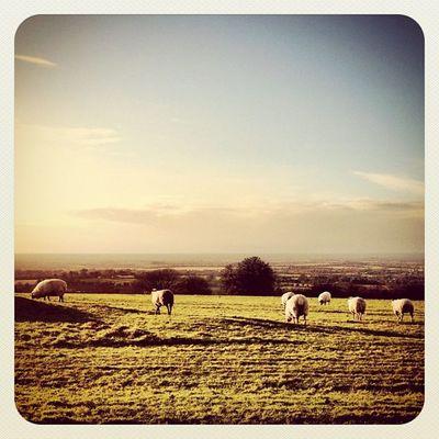 Greetings from Ireland ? #sheep #landscape #meath #hill_of_tara #earlybirdlove #jj #jj_forum #beautiful_ireland #ireland Ireland Jj  Earlybirdlove Jj_forum Hill_of_tara Meath Beautiful_ireland Landscape Sheep