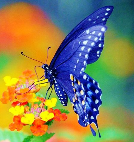 Insect Butterfly - Insect Animals In The Wild Animal Themes Animal Wing Butterfly Nature