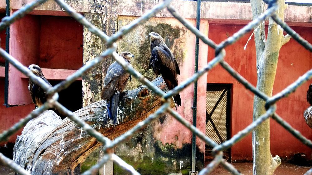 EyeEm Selects Chainlink Fence Security Animal Themes Metal Safety Day Bird