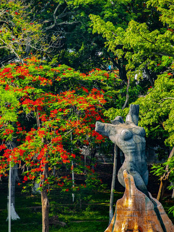 """""""Mujer Ceiba"""" Art And Craft Autumn Beauty In Nature Change Day Green Color Growth Nature No People Orange Color Outdoors Park Park - Man Made Space Plant Representation Sculpture Statue Tree Tree Trunk Trunk"""