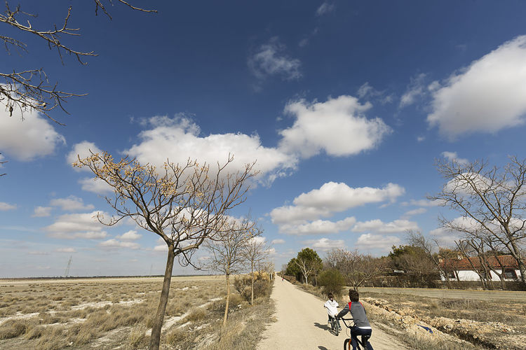 Children walking with their bicycles through a greenway in Albacete, Spain. Children Bare Tree Beauty In Nature Branch Cloud - Sky Day Girls Landscape Leisure Activity Lifestyles Mammal Men Nature One Person Outdoors People person Real People Scenics Sky Sport Tranquility Tree