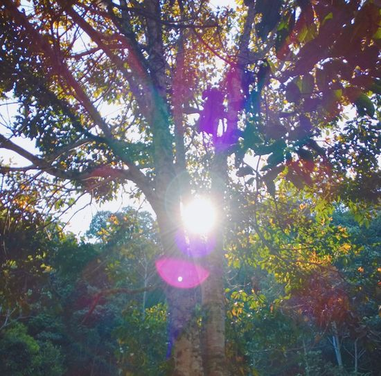 The light. Dreamy Tree Sunbeam Sunlight Nature Lens Flare Beauty In Nature Wood Forest Photo #capturingmoments Afternoon