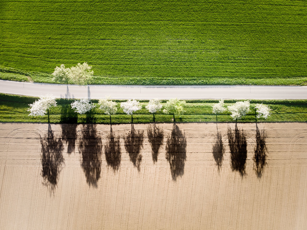 Aerial view of farm during sunny day