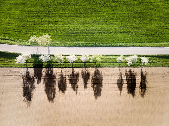 Agriculture Blossoming Tree DJI X Eyeem From Above  Green Color Nature Path Road Shadows & Lights Trees Aerial Photography Contrast Day Dronephotography Environment Grass Green Color Landscape Line Of Trees Outdoors Shadows Spring Street White Trees Winter And Spring