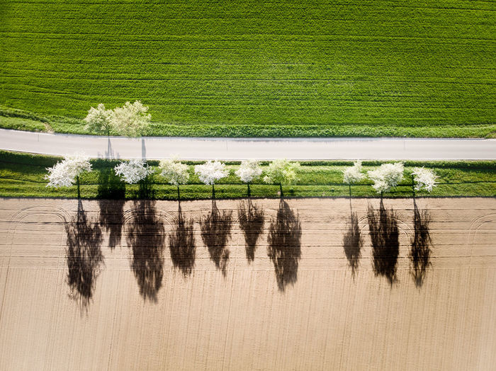 Transition Border Seasons Agriculture Blossoming Tree DJI X Eyeem From Above  Green Color Nature Path Road Shadows & Lights Trees Aerial Photography Contrast Day Dronephotography Environment Grass Green Color Landscape Line Of Trees Outdoors Shadows Spring Street White Trees Winter And Spring 10 The Great Outdoors - 2018 EyeEm Awards