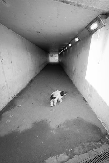 High angle view of dog in tunnel