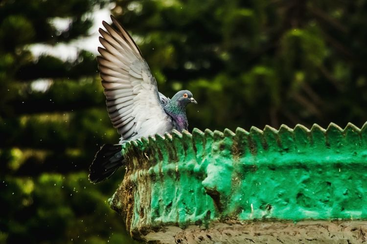 Bird Photography Fun Bird Pegion Feather