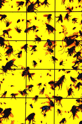 Backgrounds Close-up Dead Fly Trap Full Frame Gardening Grid Insect Large Group Of Animals Nature No People Pattern Stuck Vertical Yellow