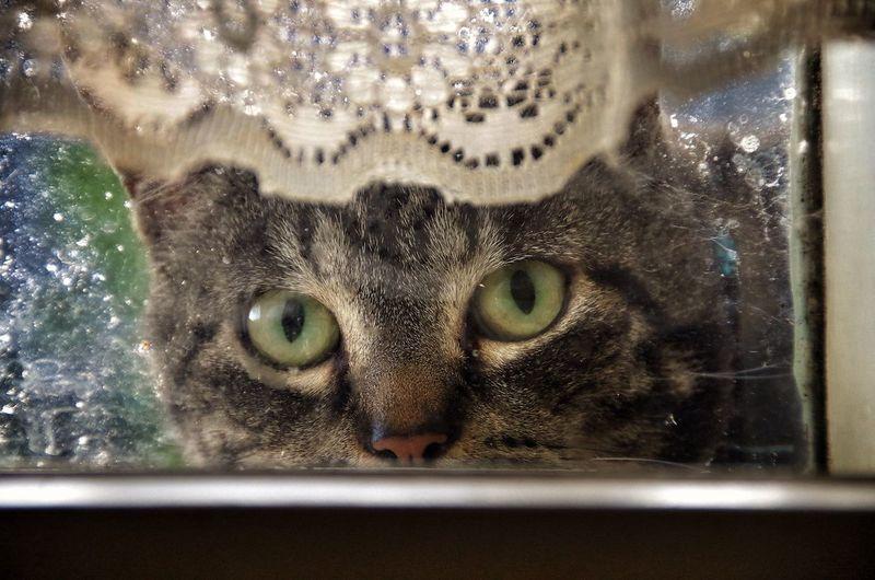 Peeping Tom Cat Cute Pet Happy