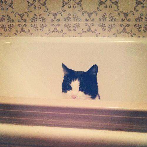 Kritischer Blick. Fast wie beim TÜV. Cat Inspecting Bathtub Catstagram catsofinstagram